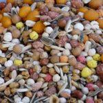 Uzgojite sjemenke za rast biljaka